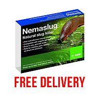 Slug Nematodes